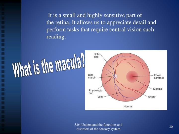It is a small and highly sensitive part of the