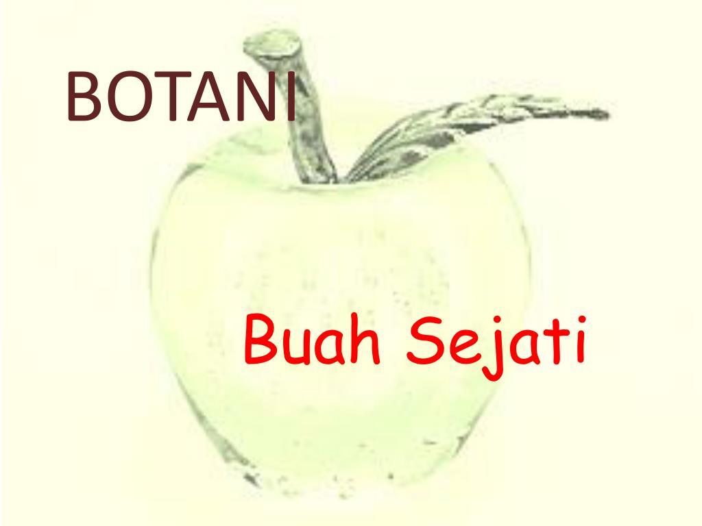 Ppt Botani Powerpoint Presentation Free Download Id 1867246