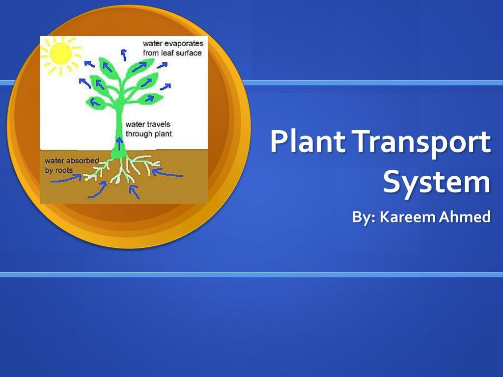 Amigo academic portal everything education | transport in plants.