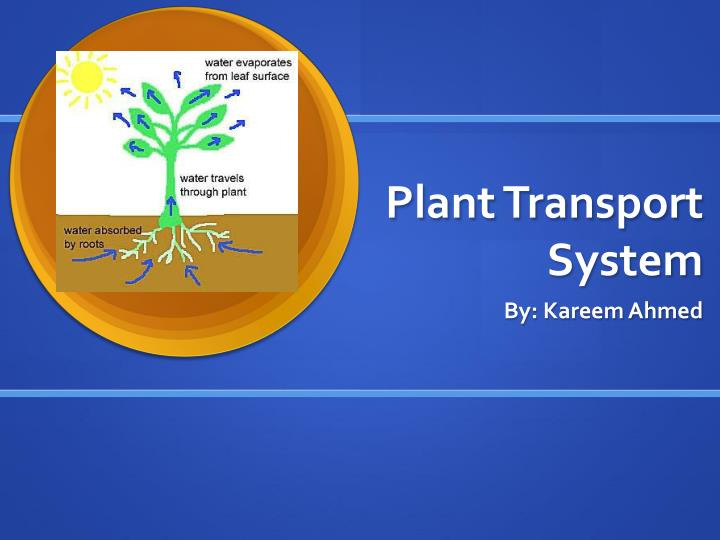 Gibberellin localization and transport in plants: trends in plant.