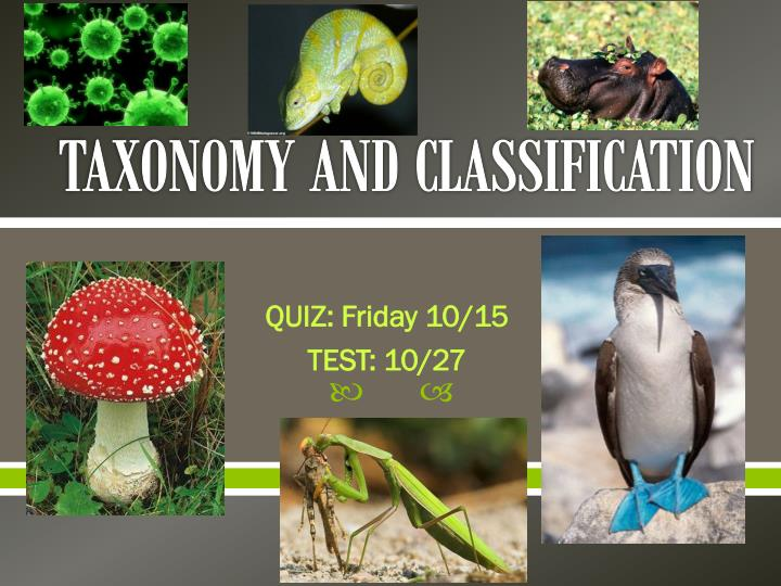 taxonomy and classification n.