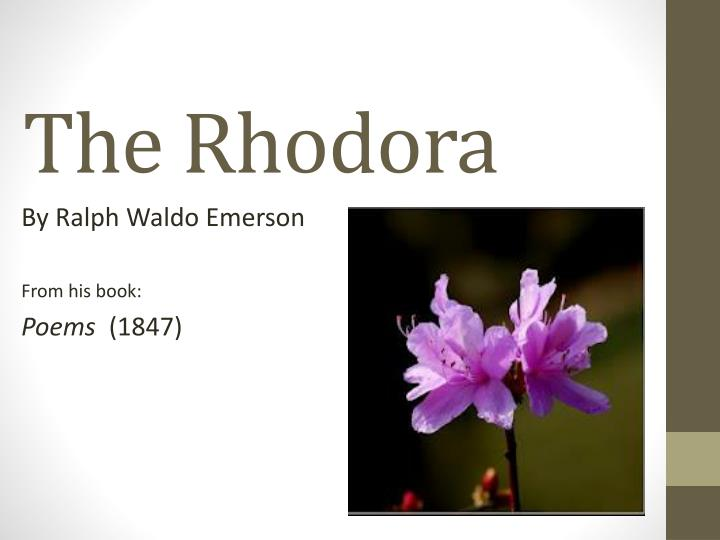 the rhodora essay Shmoop guide to ralph waldo emerson biography & history of ralph waldo emerson, written by phd students from stanford, harvard, berkeley.