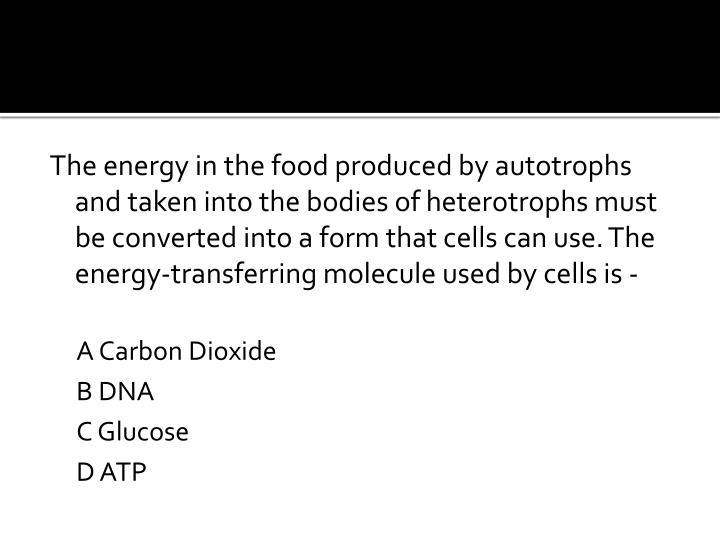 The energy in the food produced by