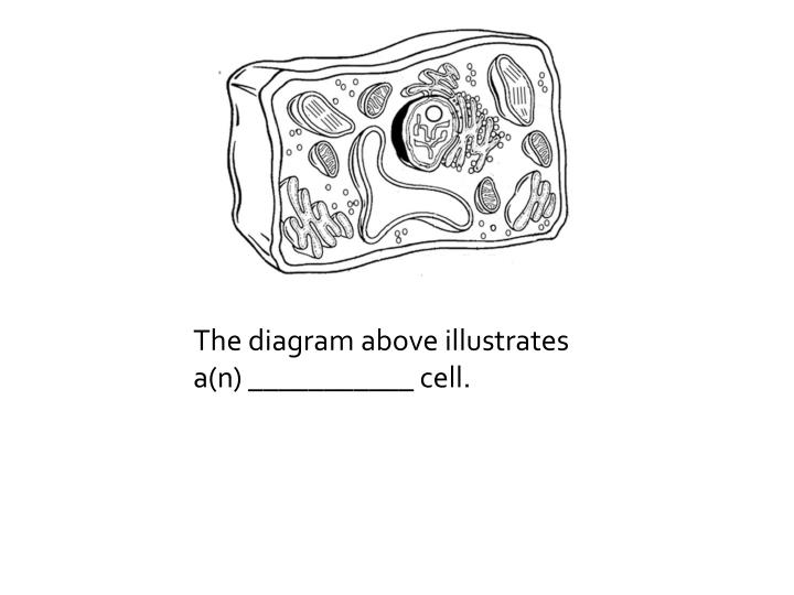 The diagram above illustrates a(n) ___________ cell.