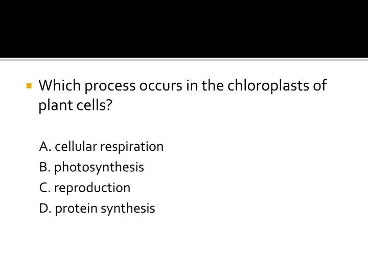 Which process occurs in the chloroplasts of plant cells?
