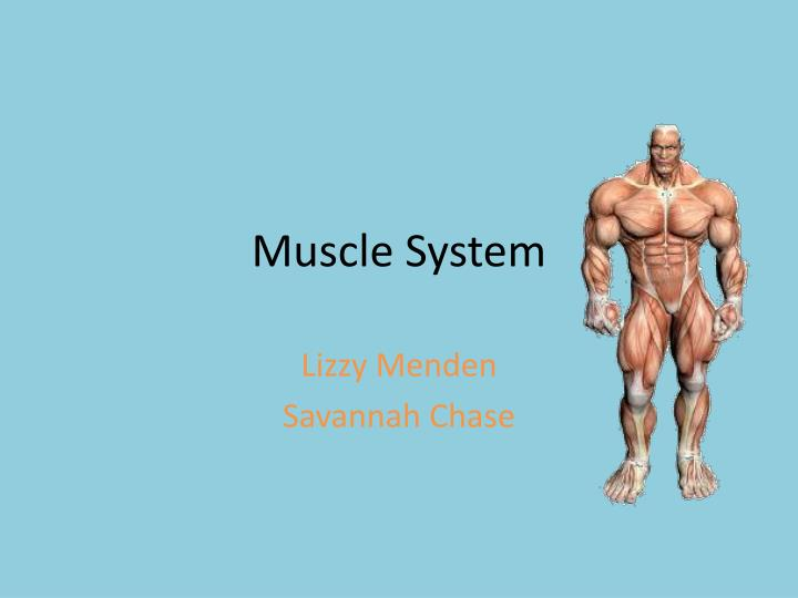 muscle system n.