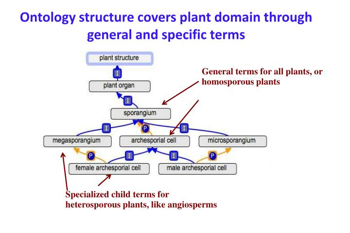 Ontology structure covers plant domain through general and specific terms