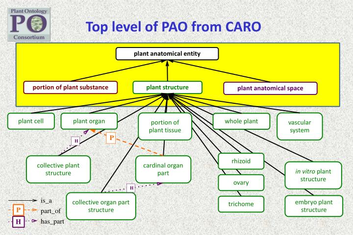 Top level of PAO from CARO
