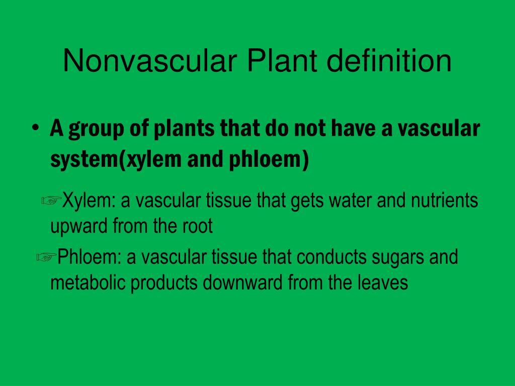 Ppt - Nonvascular Plant Powerpoint Presentation