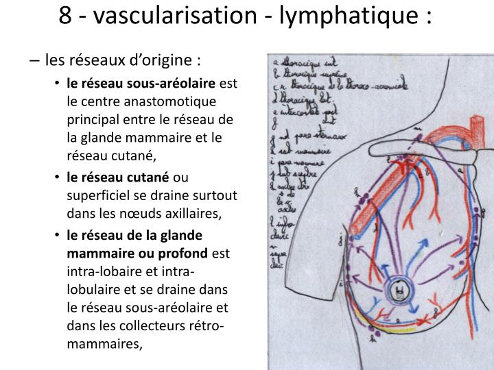 8 - vascularisation - lymphatique: