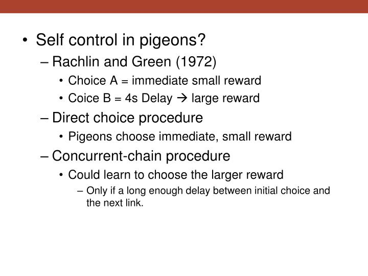 Self control in pigeons?
