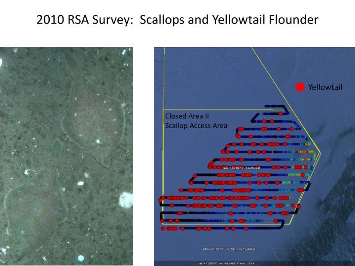 2010 RSA Survey:  Scallops and Yellowtail Flounder