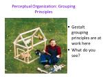 perceptual organization grouping principles