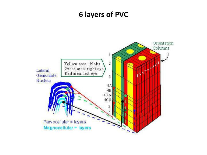 6 layers of PVC
