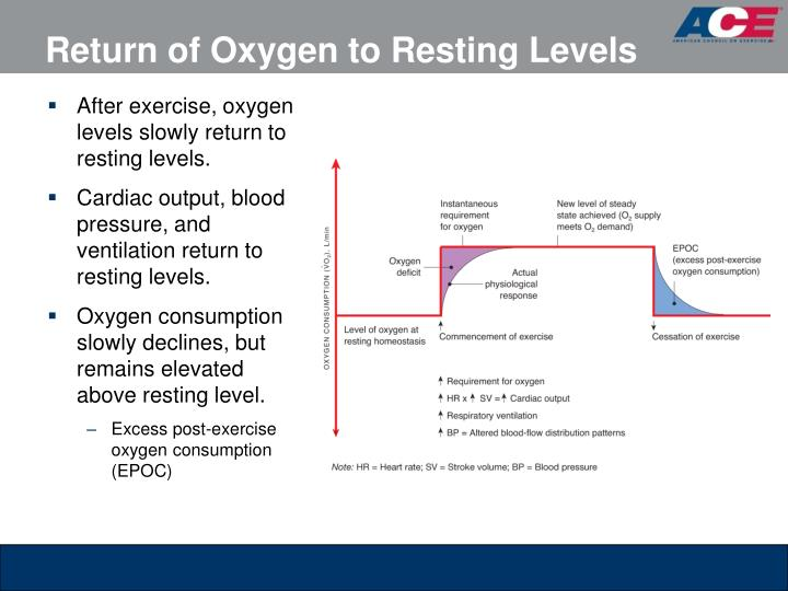 ventilation and oxygen consumption essay Essays animal physiology total ventilation of the creek college 5960 floyd j brinley oxygen consumption due to bodily activity of the animals is.