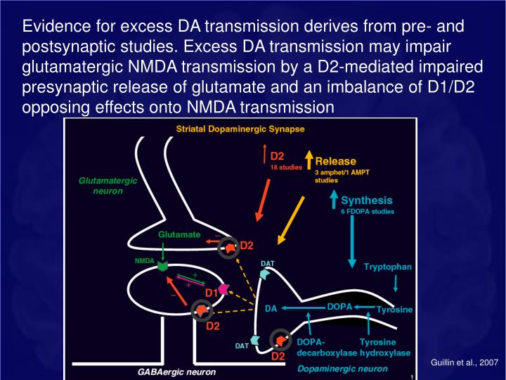 Evidence for excess DA transmission derives from pre- and postsynaptic studies. Excess DA transmission may impair glutamatergic NMDA transmission by a D2-mediated impaired