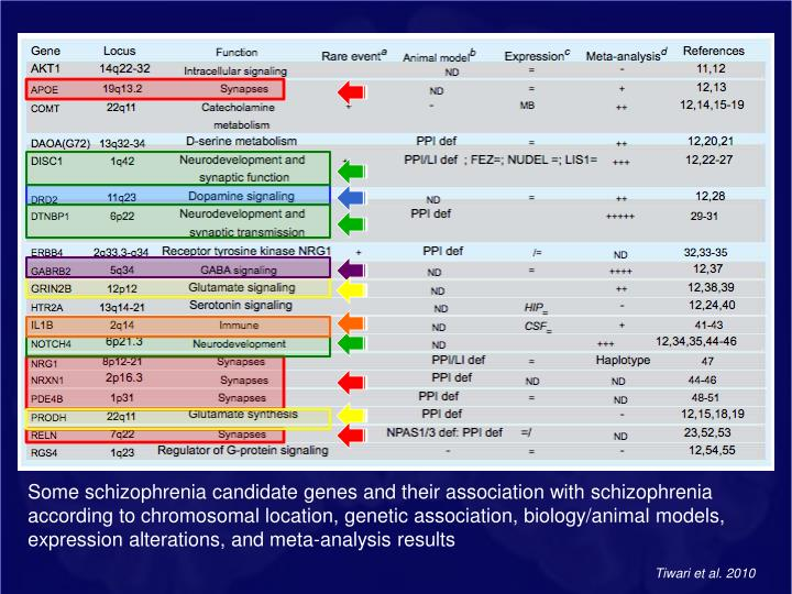 Some schizophrenia candidate genes and their association with schizophrenia according to chromosomal location,genetic association, biology/animal models, expression alterations, and meta-analysis results
