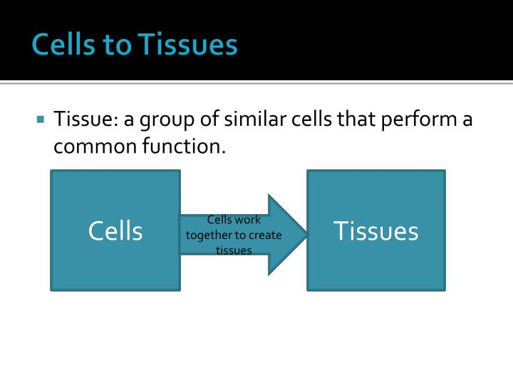 Cells to tissues