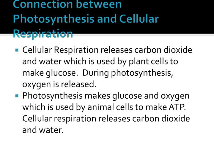 Connection between Photosynthesis and Cellular Respiration