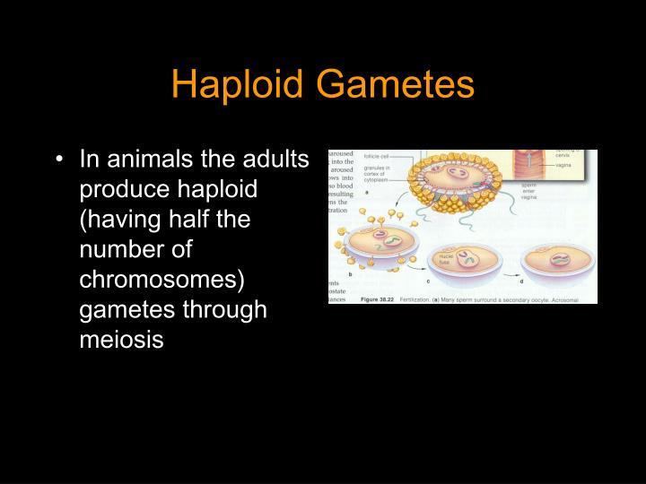 Haploid gametes