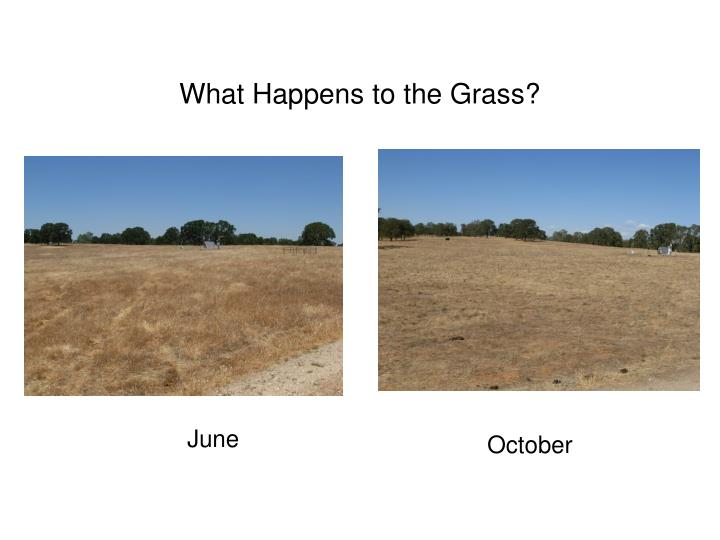 What Happens to the Grass?