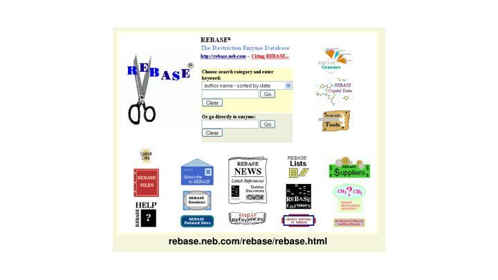 rebase.neb.com/rebase/rebase.html