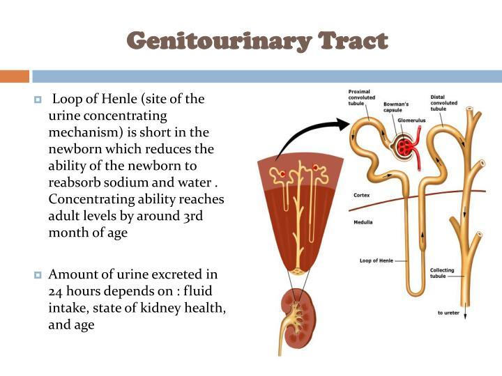 Genitourinary Tract