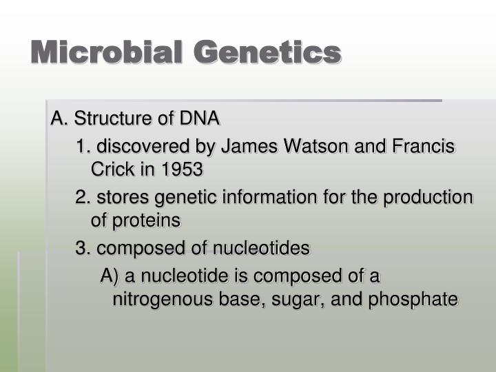 PPT - Chapter 8 Microbial Genetics PowerPoint Presentation