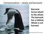 commensalism whale and barnacle
