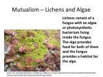 mutualism lichens and algae