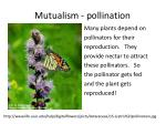 mutualism pollination
