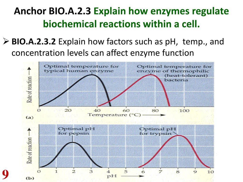 PPT - PA Keystone Biology MT & FINAL EXAM Review Pkt ...