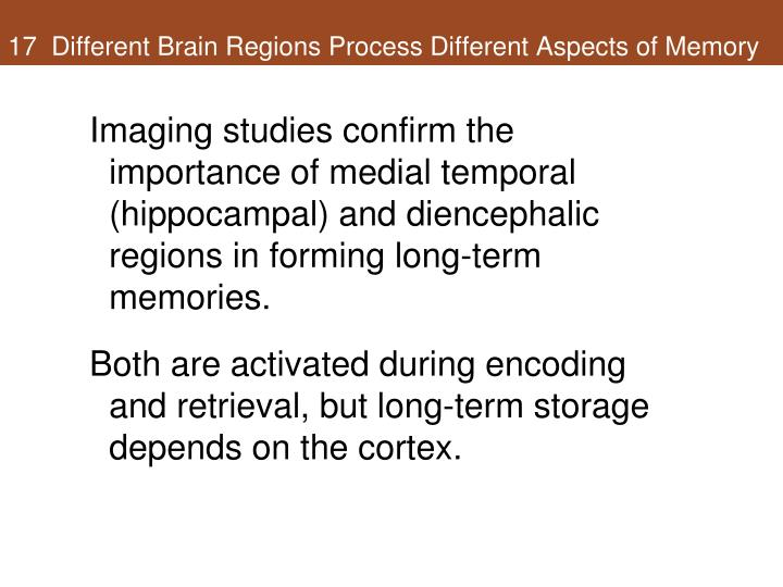 17  Different Brain Regions Process Different Aspects of Memory