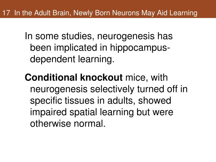 17  In the Adult Brain, Newly Born Neurons May Aid Learning