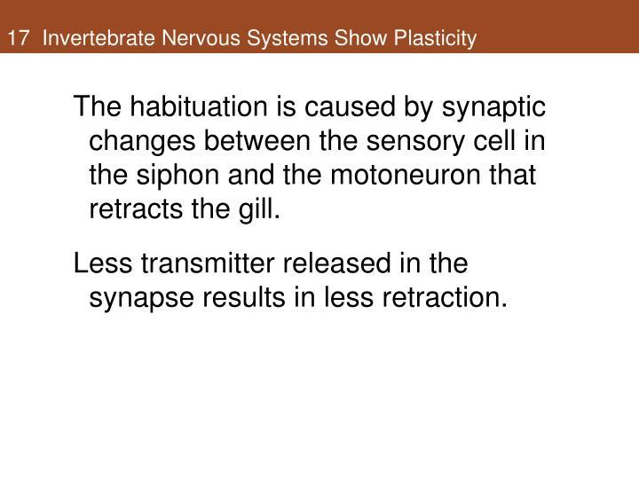 17  Invertebrate Nervous Systems Show Plasticity