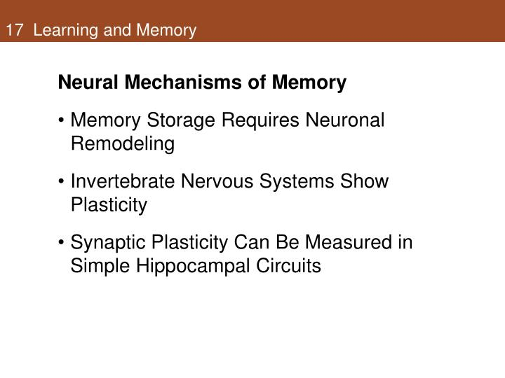 17 learning and memory1
