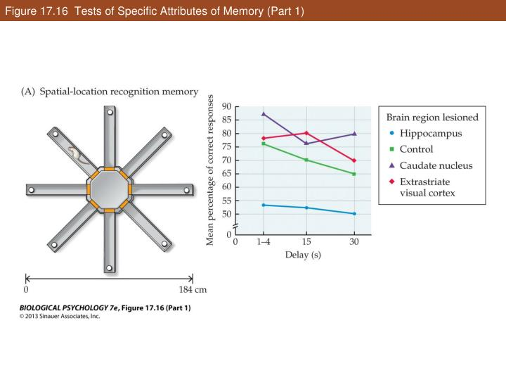 Figure 17.16  Tests of Specific Attributes of Memory (Part 1)