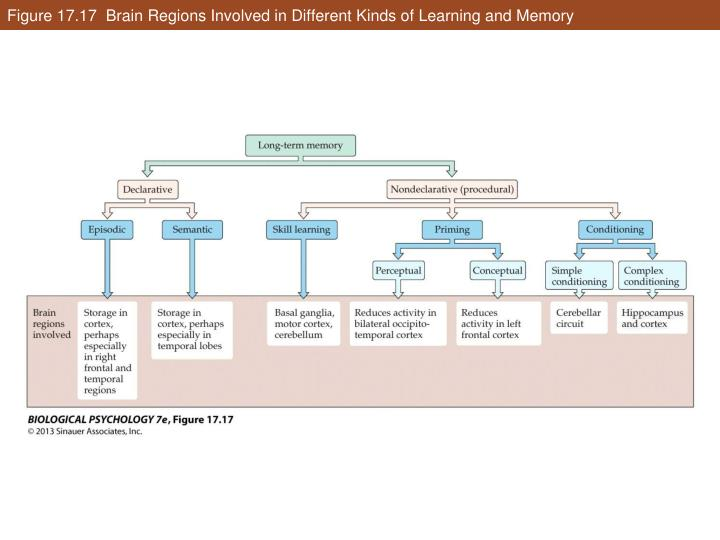 Figure 17.17  Brain Regions Involved in Different Kinds of Learning and Memory