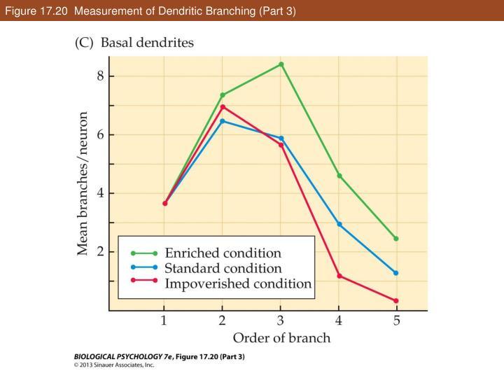 Figure 17.20  Measurement of Dendritic Branching (Part 3)