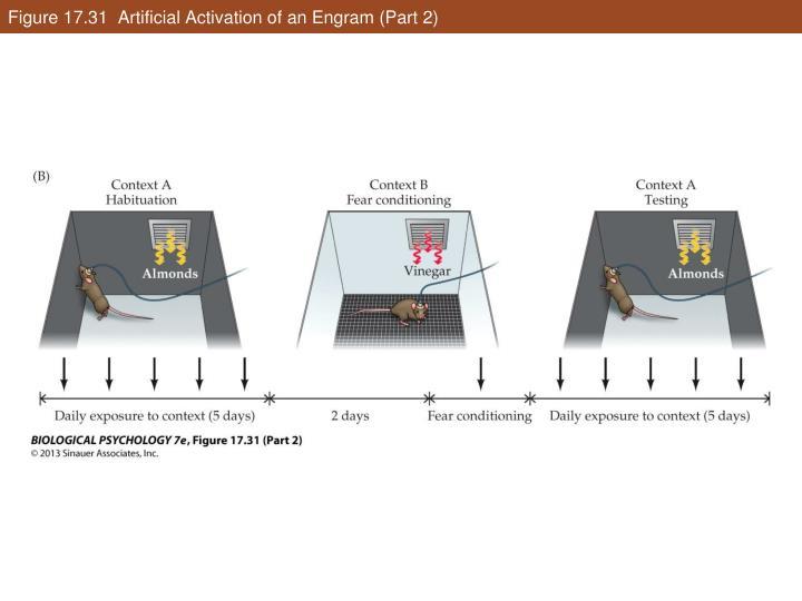 Figure 17.31  Artificial Activation of an Engram (Part 2)