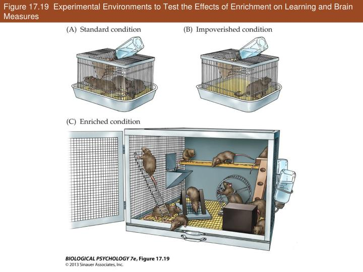 Figure 17.19  Experimental Environments to Test the Effects of Enrichment on Learning and Brain Measures