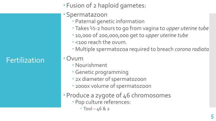 Fusion of 2 haploid gametes: