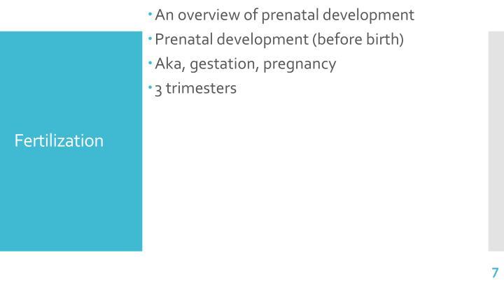 An overview of prenatal development