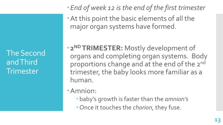 End of week 12 is the end of the first trimester