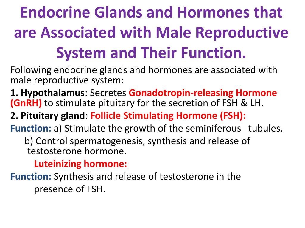 Ppt Following Endocrine Glands And Hormones Are Associated With