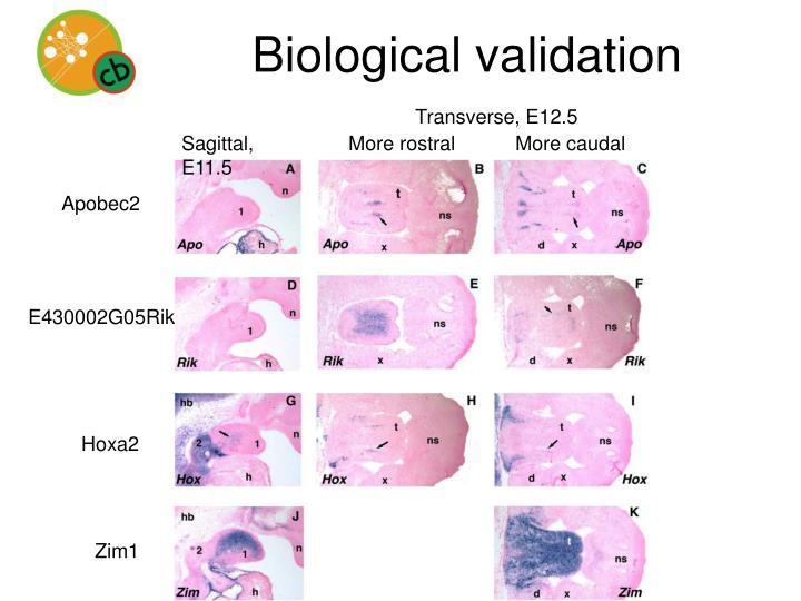 Biological validation