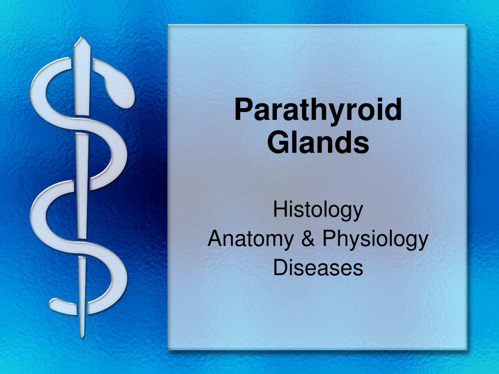 Ppt Parathyroid Glands Powerpoint Presentation Free Download