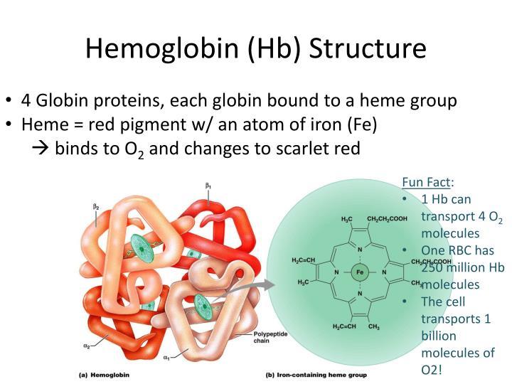 Hemoglobin (