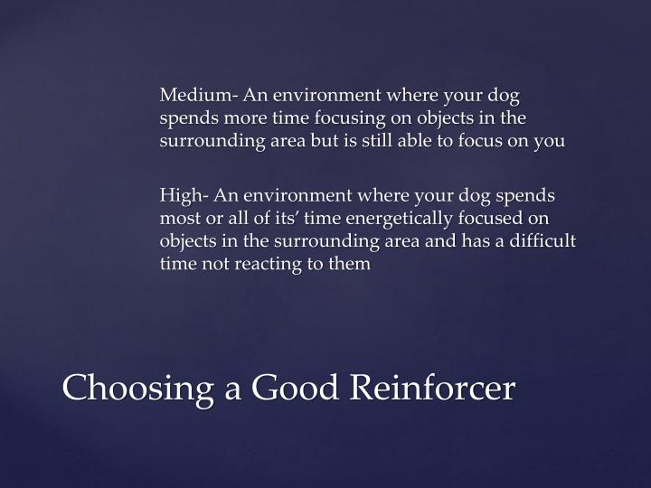 Medium- An environment where your dog spends more time focusing on objects in the surrounding area but is still able to focus on you