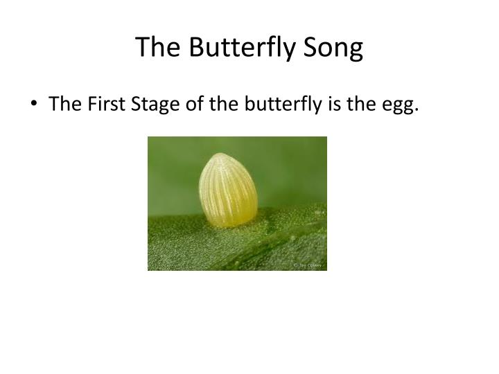 the butterfly song n.